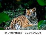 tiger | Shutterstock . vector #323914205
