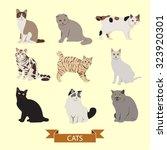 Stock vector cats vector design illustration 323920301