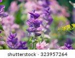 purple flowers | Shutterstock . vector #323957264