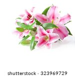 pink lilies bunch on a white... | Shutterstock . vector #323969729