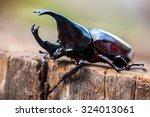 Male Rhinoceros Beetle  Rhino...