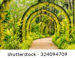 Arch Way Of Yellow Orchid From...