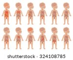 kid body  medical illustration  ... | Shutterstock .eps vector #324108785