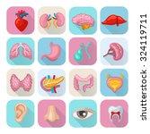 healthy human body organs flat... | Shutterstock .eps vector #324119711