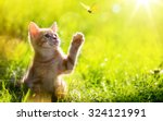 art young cat   kitten hunting... | Shutterstock . vector #324121991