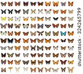 Collection Of 100 Butterfly An...