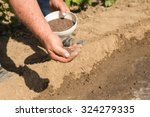 a man throws seed cabbage. | Shutterstock . vector #324279335