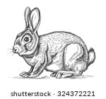 Stock vector hand drawn vector rabbit in engraving style bunny and hare vintage design sketch illustration 324372221