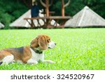 Stock photo relax dog in a garden 324520967