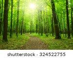 sun beam in a green forest   Shutterstock . vector #324522755