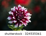 Dahlias Flower  On Blurred...