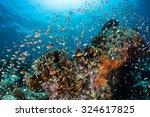 Vibrant Reef Fish Feed On...