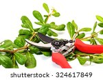 Red Pruning Shears With Leaves