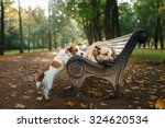 Stock photo mixed breed dog and jack russell terrier walking in autumn park 324620534