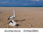 Two Pelicans On Sand Bar Two...