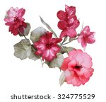 color illustration of flowers... | Shutterstock . vector #324775529