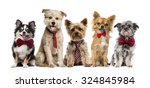Stock photo group of dogs in front of a white background 324845984
