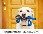 Stock photo labrador retriever with leash is waiting for walk 324867974