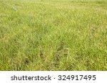 Green Wild Grass Field...
