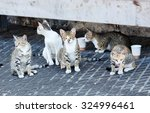 Group Homeless Cats Under A...