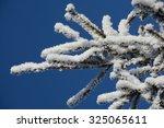 Fir Branch Snow
