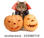 cat evil with fangs in black... | Shutterstock . vector #325080719