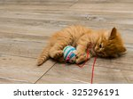 Stock photo ginger kitty with blue eyes 325296191