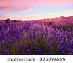lavender field in summer near... | Shutterstock . vector #325296839