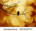 Bird Silhouette On Wood Branch...