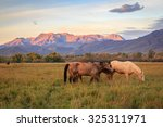Sunrise Scene With Horses In A...