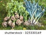 Autumn Vegetables. Leek And...