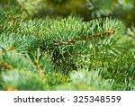 green fir tree or pine branches   Shutterstock . vector #325348559