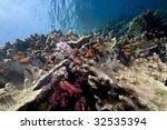 ocean  coral and fish | Shutterstock . vector #32535394