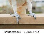 Cockatoo Feet