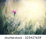 summer meadow | Shutterstock . vector #325427639