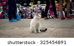 Alone Cat In  Human Legs Crowd