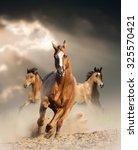 Wild Horses Running Wild In...
