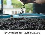 the amazon acai fruit. | Shutterstock . vector #325608191