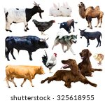 set of setters and other farm... | Shutterstock . vector #325618955
