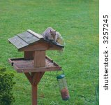 Grey Squirrel Sitting On Top Of ...