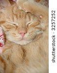 Stock photo sweet kitten is taking a nap 3257252