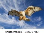 Large Ferruginous Hawk In...