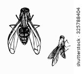 black and white flies | Shutterstock . vector #325788404