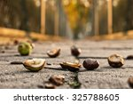 Chestnuts Lying On The Pavemen...