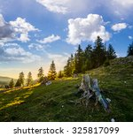 old stump among green grass and stones in front of fir forest on hillside in morning light - stock photo