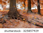 golden autumn in the forest | Shutterstock . vector #325857929