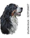 Drawing Bernese Mountain Dog ...