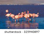 Group Of Pink Flamingos In The...