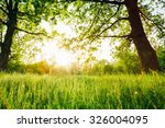 summer sunny forest trees and... | Shutterstock . vector #326004095