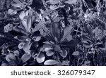 euphorbia milii   tenerife ... | Shutterstock . vector #326079347